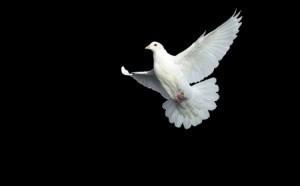 Gołąb (aktualizacja Pigeon Update)